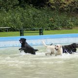 Zaterdag 21 en zondag 22 september Hondenplons