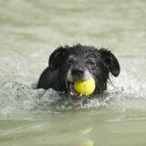 De gezelligste slotactiviteit: de hondenplons!